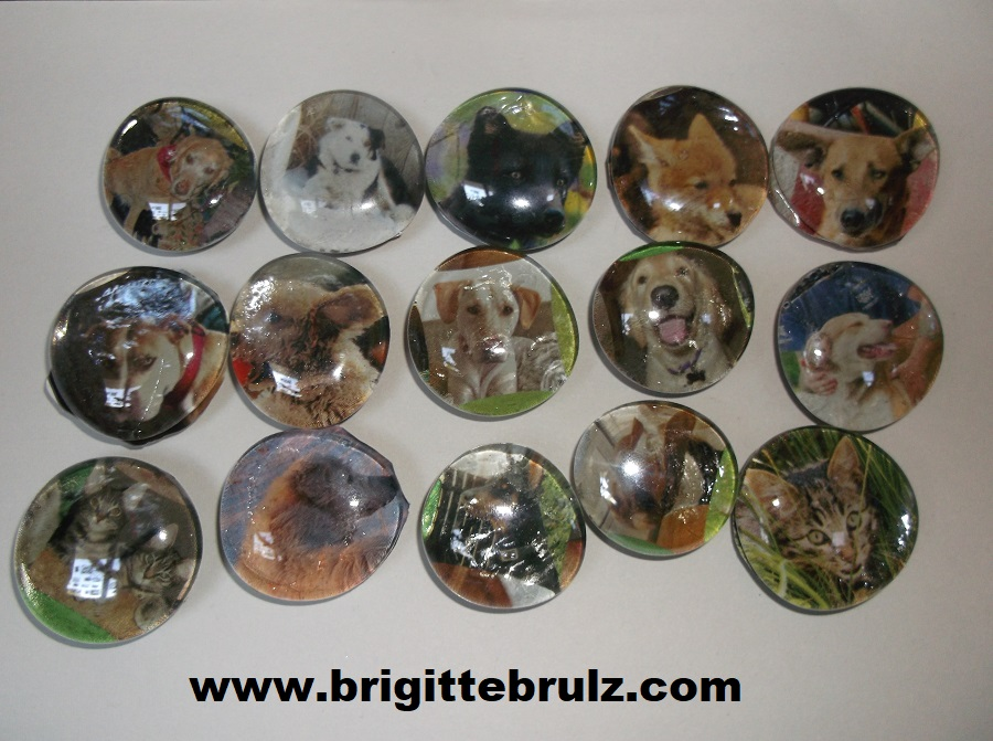 pet magnets for vet themed party
