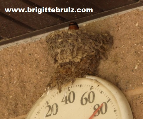 bird nest above thermometer