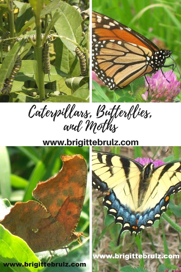 Caterpillars, Butterflies, and Moths