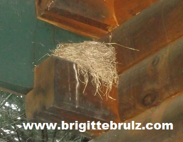 nest on side of cabin