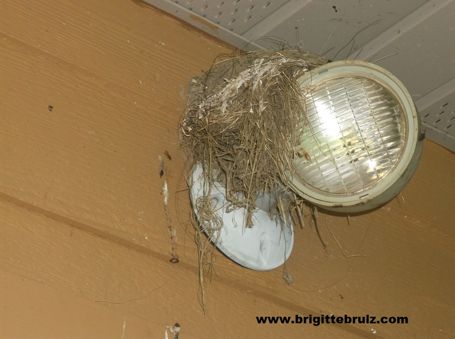 nest on light