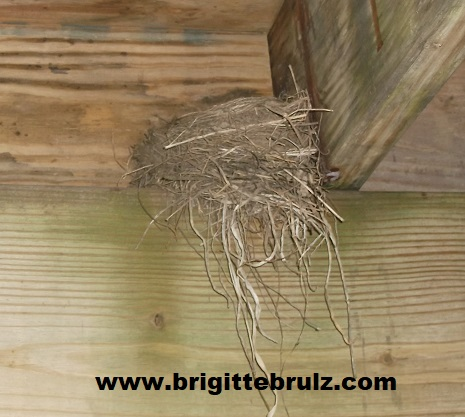nest in a building