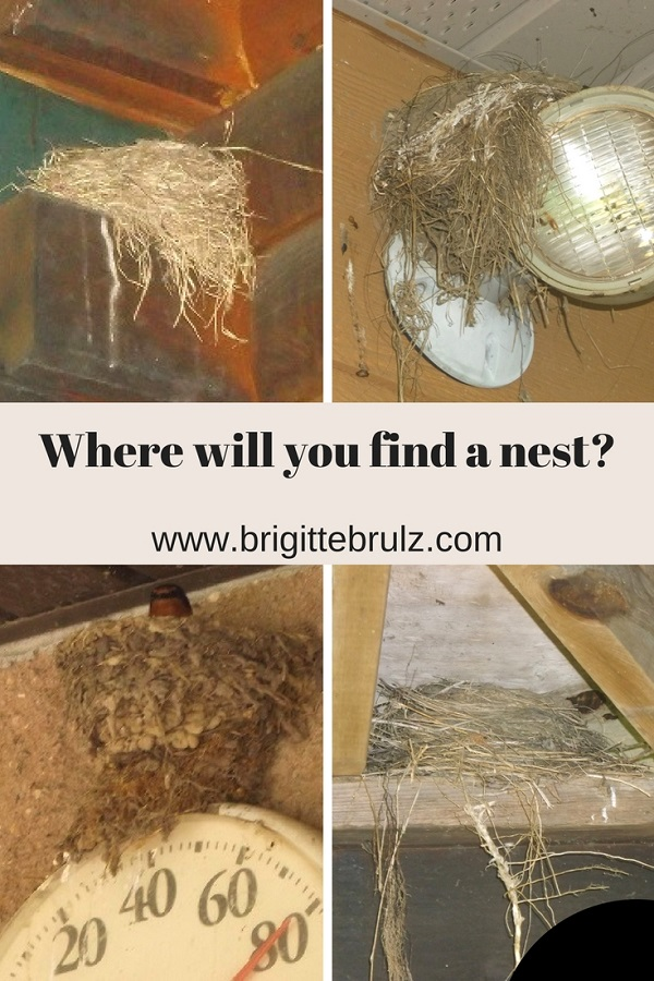 Interesting Places for Nests