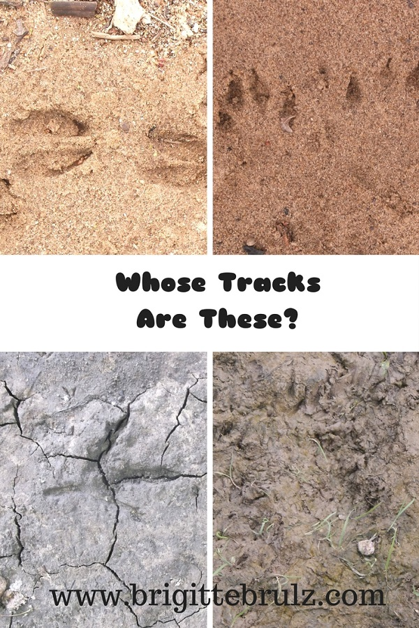 Finding animal tracks