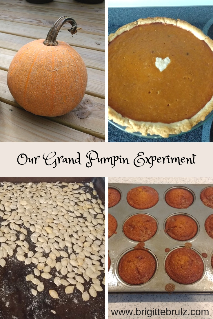 Our Grand Pumpkin Experiment Results