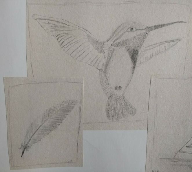 humminbird and feather drawing