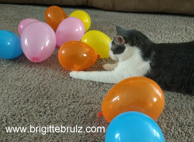 Cat Watching Balloon